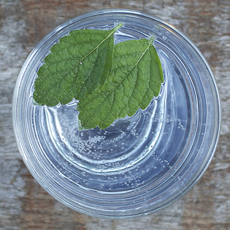 lemon balm gin and tonic